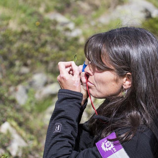 Identification à la loupe - photo P.Saulay - Parc national des Ecrins