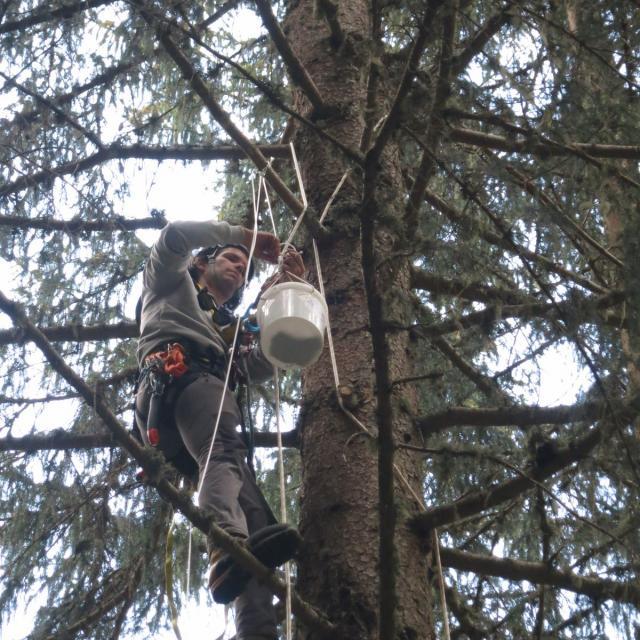 Pieges en canopée réserve intégrale lauvitel - photo Parc national des Ecrins - printemps 2020