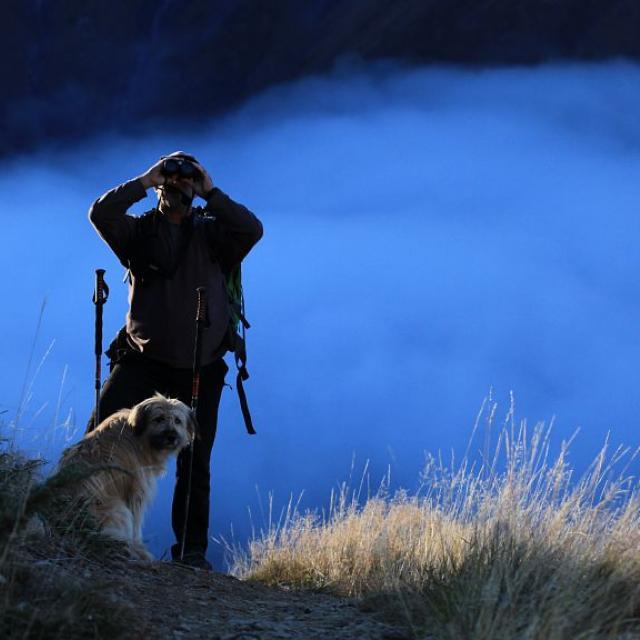 Berger Muande - photo M.Corail - Parc national des Ecrins