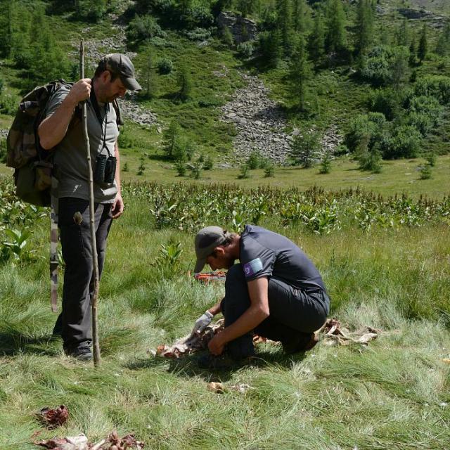 Constat de dommage - photo D.Vincent - Parc national des Ecrins