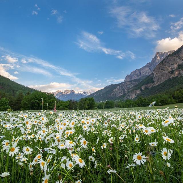 Prairie fleurie aux Vigneaux © T. Maillet - PNE