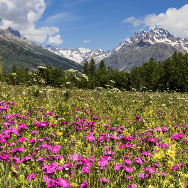 Prairie fleurie en Vallouise - © T. Maillet - PNE
