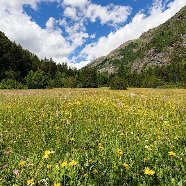 Concours des prairies fleuries : parcelle gagnante - T. Maillet - PNE