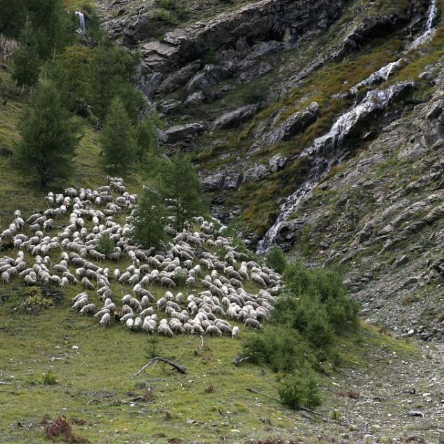 Pastoralisme - Alpage de Rouannette - © Marc Corail -Parc national des Ecrins