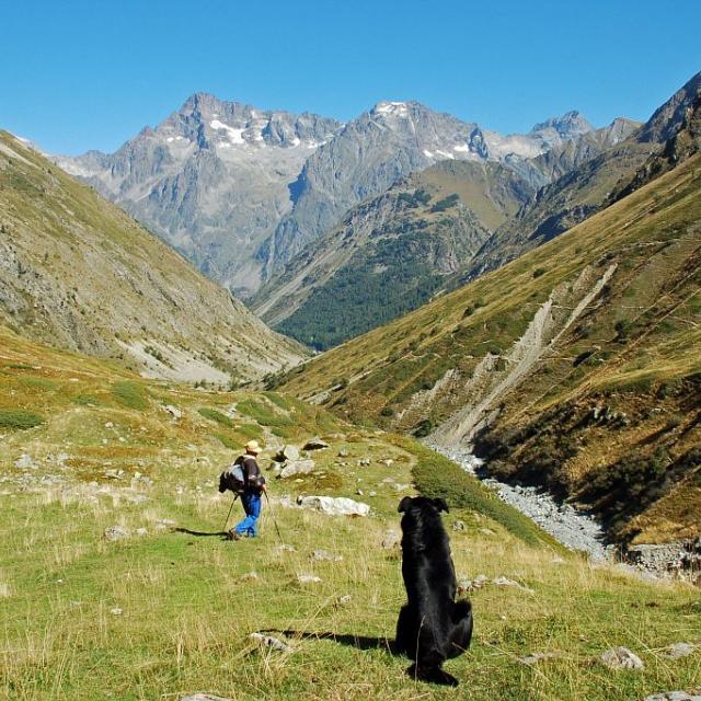 Itinéraire de la cabane de L'Aup -  berger de l'Aup et son chien © Dominique Vincent - Parc national des Ecrins