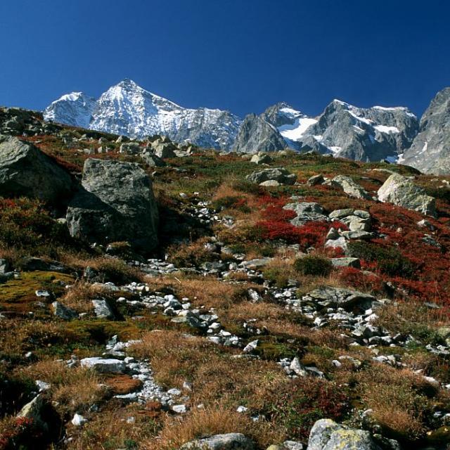 Lande en automne devant Neige Cordier ©Bernard Nicollet- Parc national des Ecrins