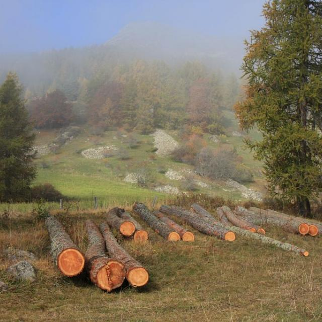 Plateau de la Coche - Coupe de bois ©Marc Corail - Parc national des Ecrins