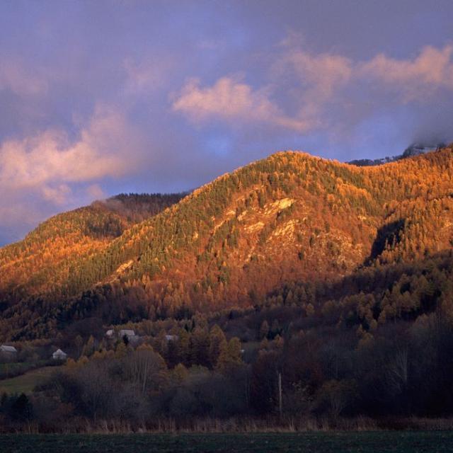 Coucher de soleil su la forêt de Saint-Léger-les-mélèzes ©Michel Francou - Parc national des Ecrins