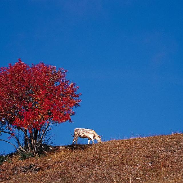 Villard Reymond - Prégentil ©Pascal Saulay - Parc national des Ecrins