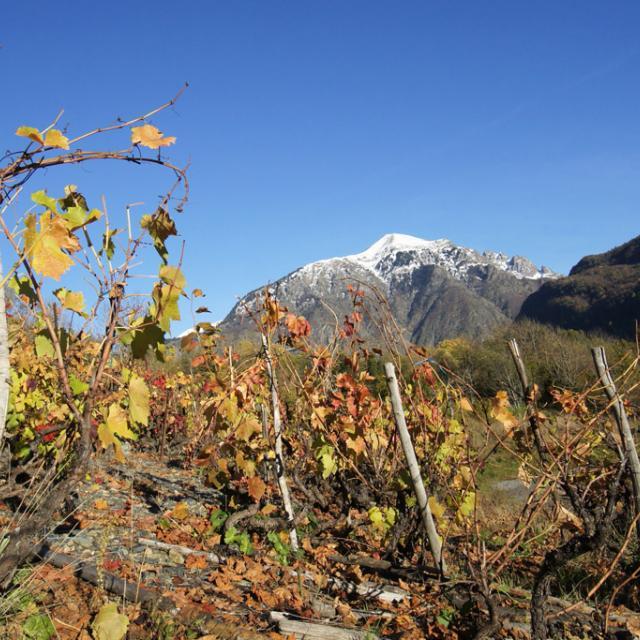 Vignoble au Vet : l'automne en premier plan © PNE / Ludovic Imberdis
