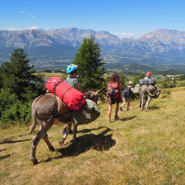 Grand tour des Ecrins - randonnée avec des ânes © Ludovic Imberdis - Parc national des Écrins