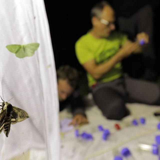 atelier insectes nocturnes avec Flavia, ecrins de nature 2018 © P.Saulay- Parc national des Écrins