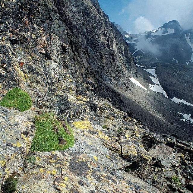 Les arêtes rocheuses de haute altitude © Jean-Pierre Nicollet - Parc national des Ecrins