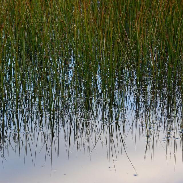 Lac du Lauzon  - Valgaudemar © Ludovic Imberdis - Parc national des Ecrins
