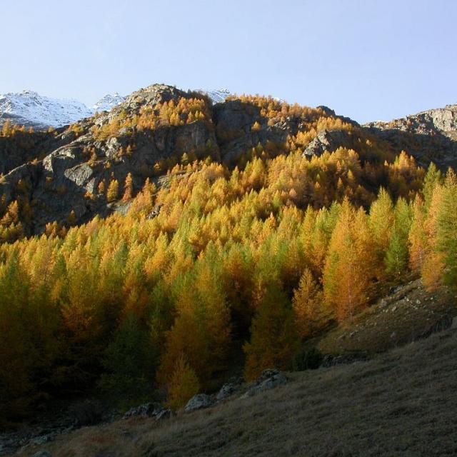 Mélézin © Parc national des Ecrins