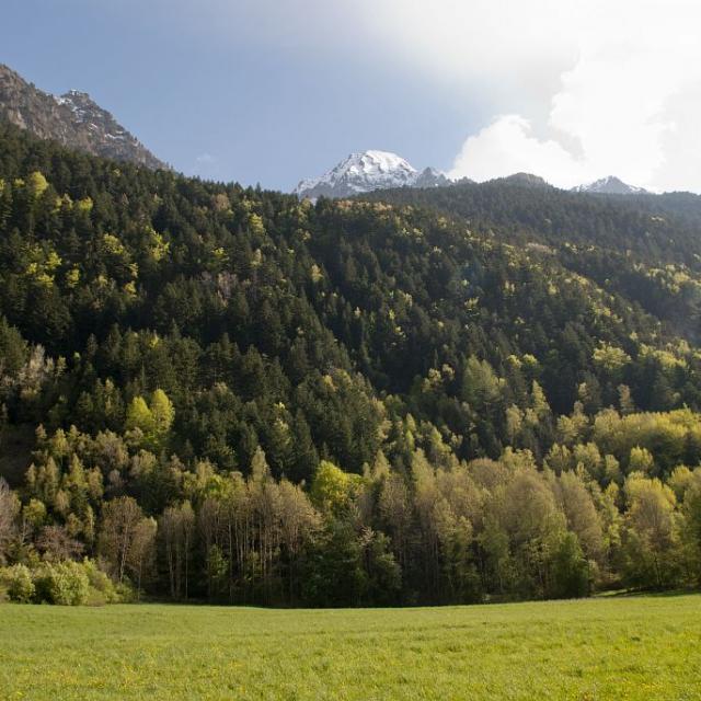 Forêt hêtraie-sapinière d'ubac (bois des Blancs) - La Chapelle en Valgaudemar © Dominique Vincent - Parc national des Ecrins