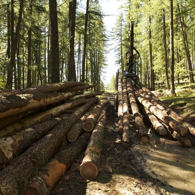 Travaux forestiers - filière bois © Jean-Philippe Telmon - Parc national des Ecrins