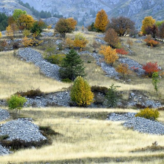 Clapiers d'épierrement sous les aiguilles de Chabrières © Mireille Coulon - Parc national des Ecrins