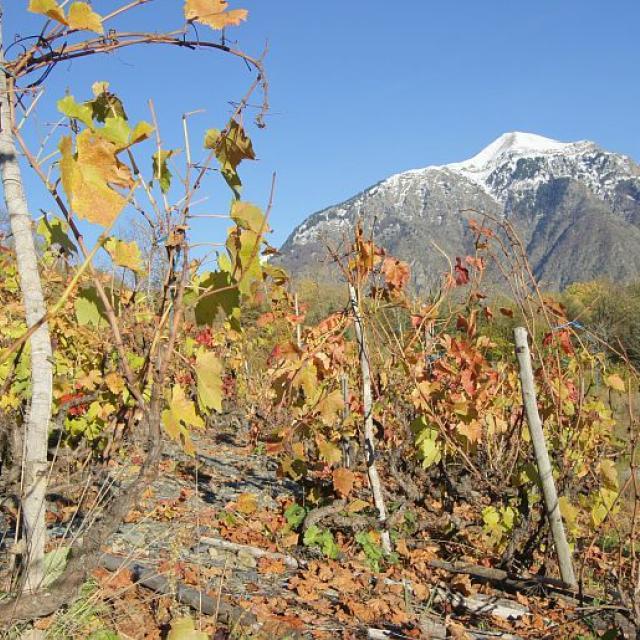 Le Vet et vigne à l'automne en premier plan © Ludovic Imberdis - Parc national des Ecrins