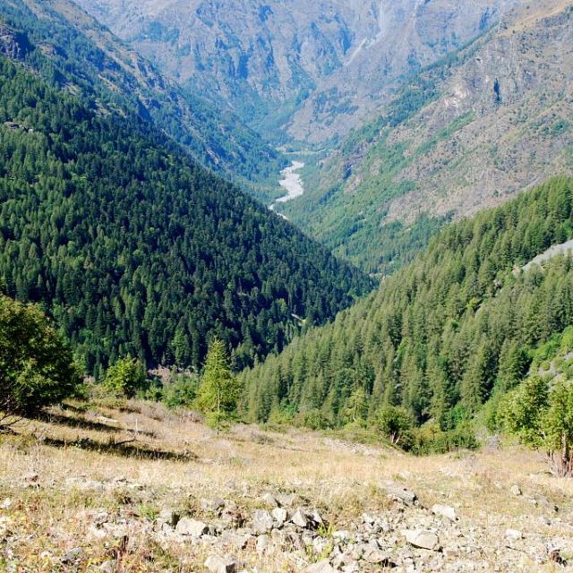 Le vallon du Roy - épicéas, hêtres et mélèzes © Dominique Vincent - Parc national des Ecrins