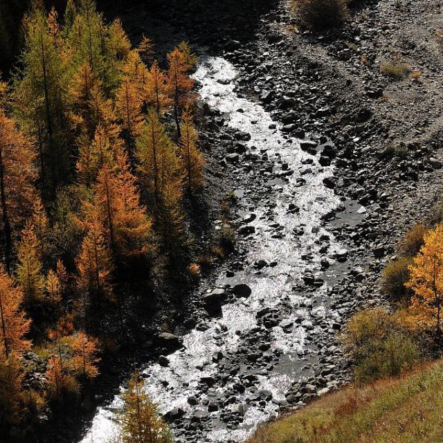 Torrent de Chargès et mélèzes à l'automne - Réallon © Mireille Coulon - Parc national des Ecrins