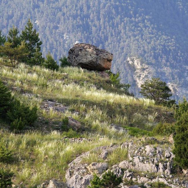 Dans le steppique Durancien, stipe pennée et genévrier thurifère près d'un bloc ératique © Jean-Philippe Telmon - Parc national des Ecrins