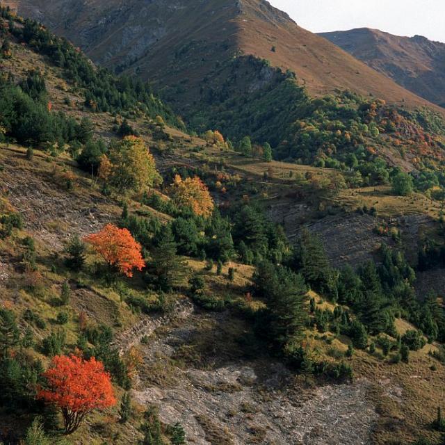 Adret du vallon du Tourot - milieu potentille du Dauphiné © Jean-Pierre Nicollet - Parc national du Dauphiné