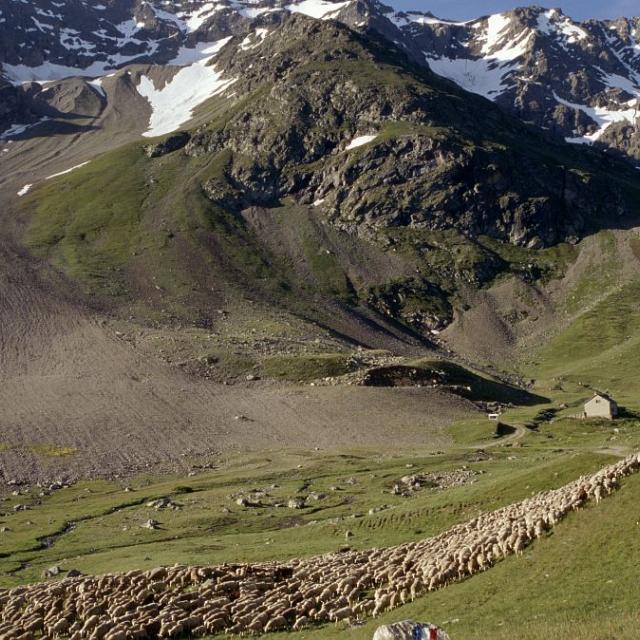 Pastoralisme au Lautaret © Bernard Patin, Parc national des Ecrins.
