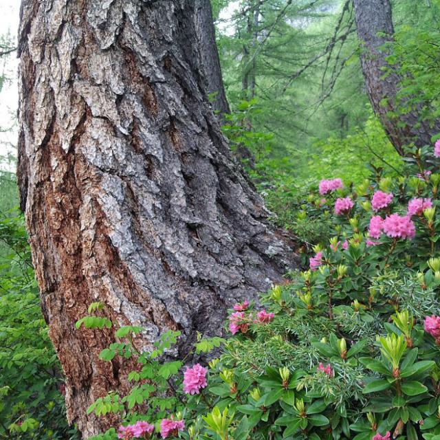 Tronc d'un vieil arbre