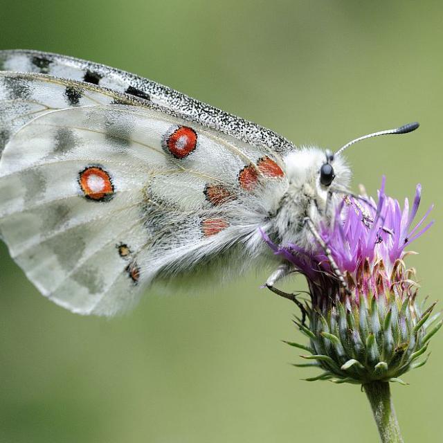 Un jloi papillon