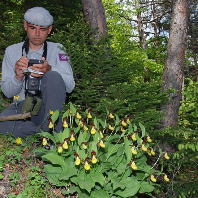 Relevé flore du Sabot de Vénus ©Denis Fiat - Parc national des Ecrins