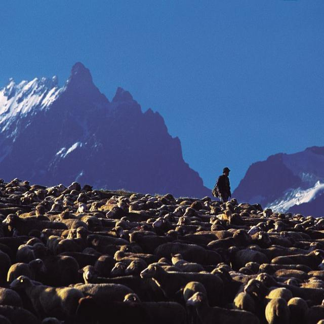 Pastoralisme - plateau des Emparis ©Bertrand Bodin