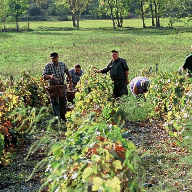 Vignerons du Valbonnais ©Nicollet Jean-Pierre - Parc national des Ecrins