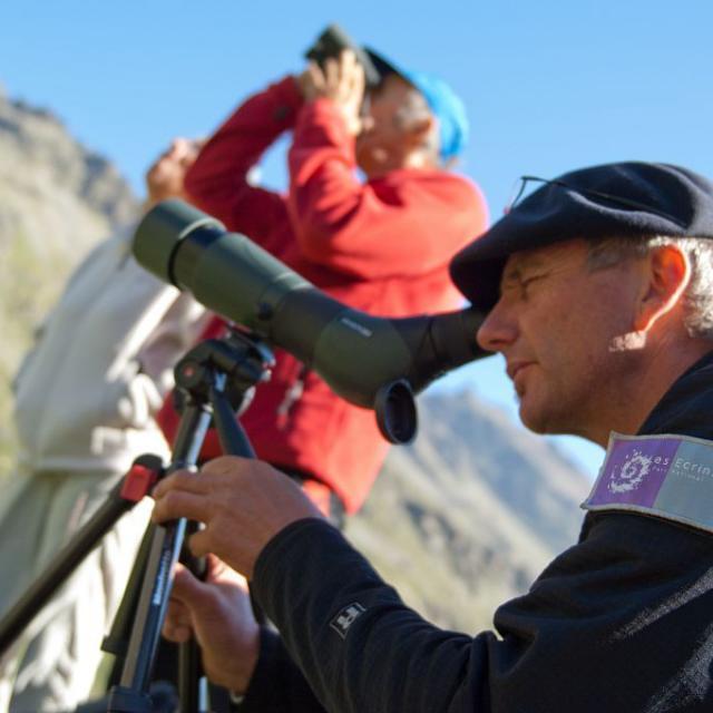 Garde-moniteur animant une sortie - Observation de bouquetins dans le vallon de la Selle ©Pierre Masclaux
