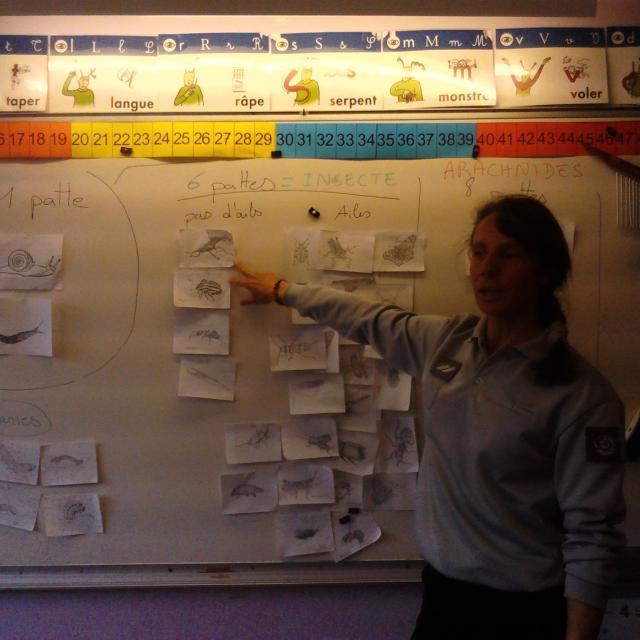 travaux en classe - école de la Bessée - projet avec le Parc national des Ecrins