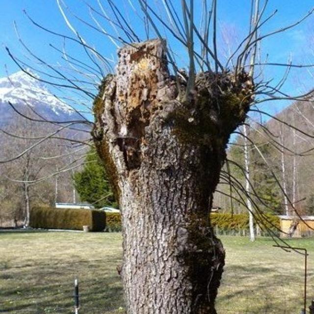 ecole Freney d'oisans - cycle 3 - Parc national des Ecrins - sortie mars 2016 - ENS Bourg d'Oisans