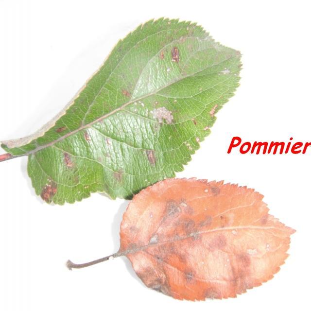 Pommier - séance oct 2017 - CE2 vallouise avec le Parc national des Écrins