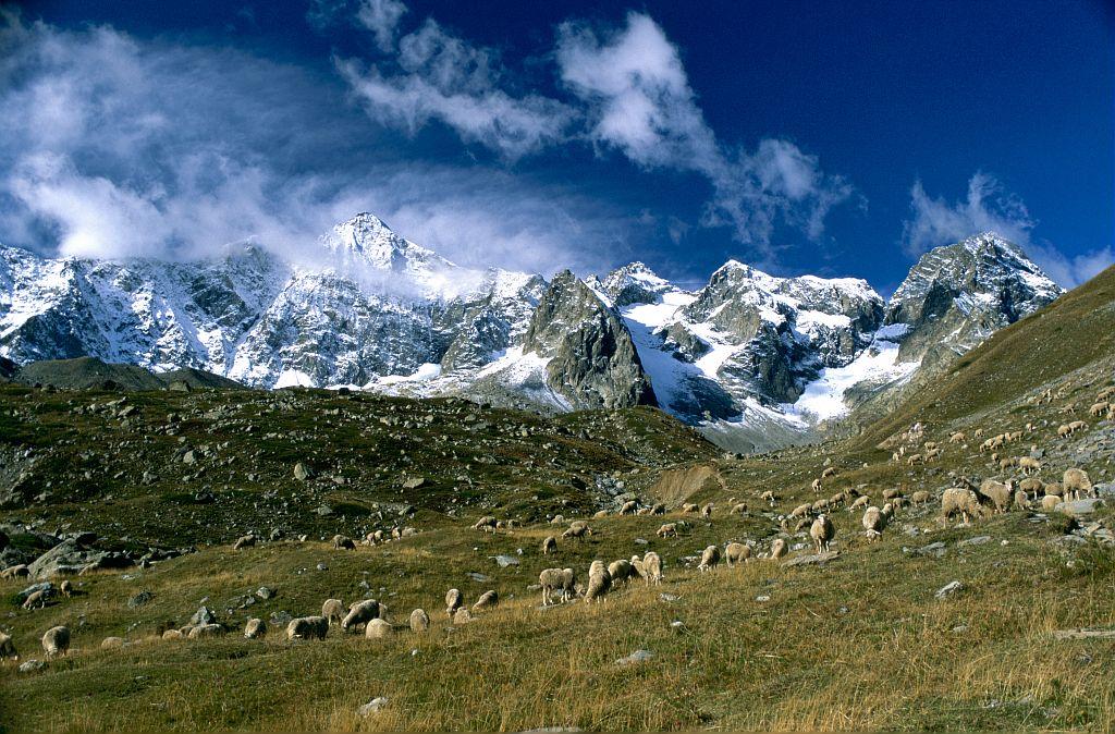 Pastoralisme de fin de saison sur l'alpage d'Arsine ©Nicollet Bernard - Parc national des Ecrins