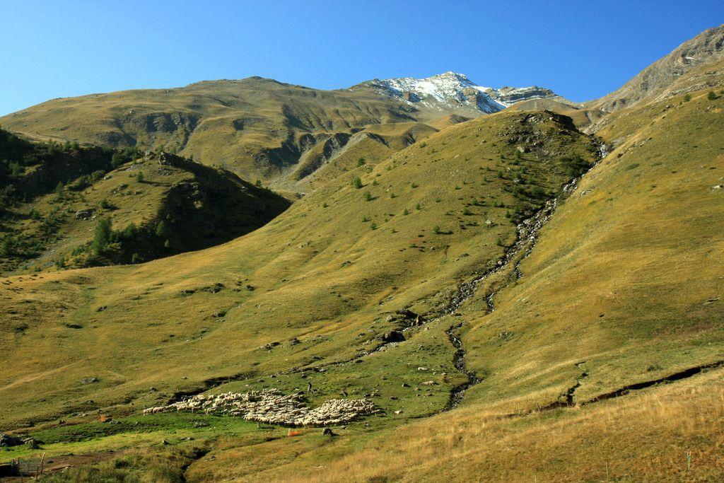 Pastoralisme au Saut du Laire ©Corail Marc - Parc national des Ecrins