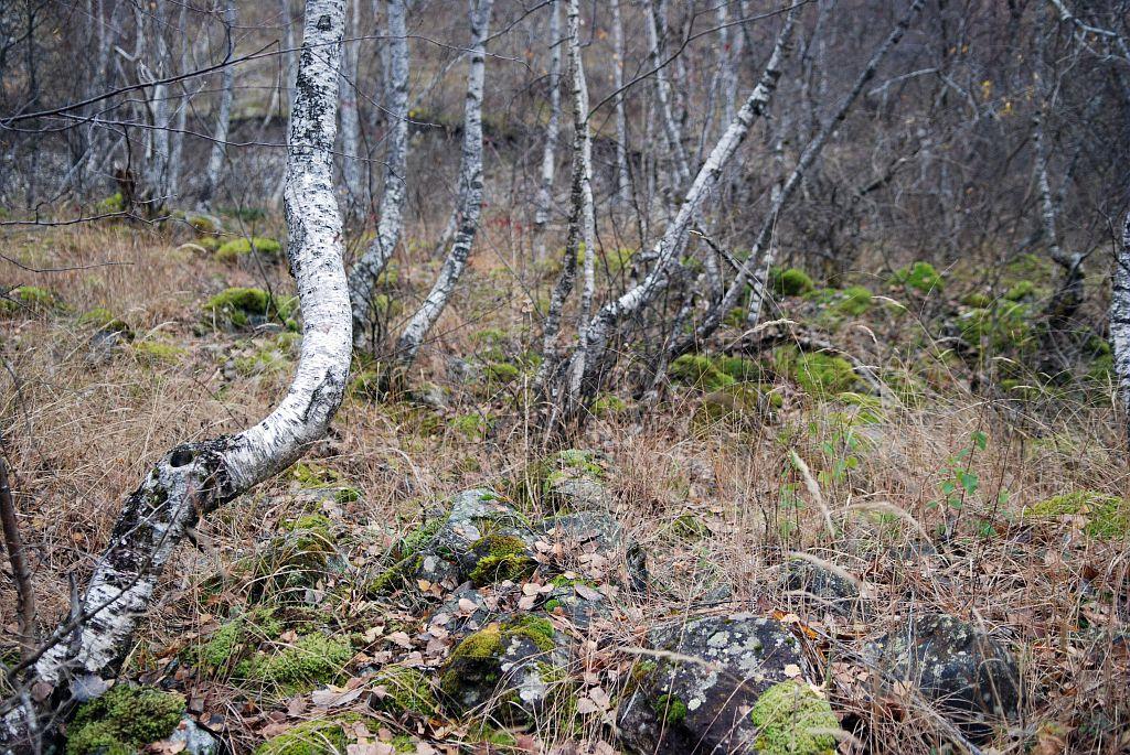 Forêt - ripisylve -  Séveraisse -  La chapelle en Valgaudemar -  RN de la Haute Séveraisse © Ludovic Imberdis - Parc national des Ecrins