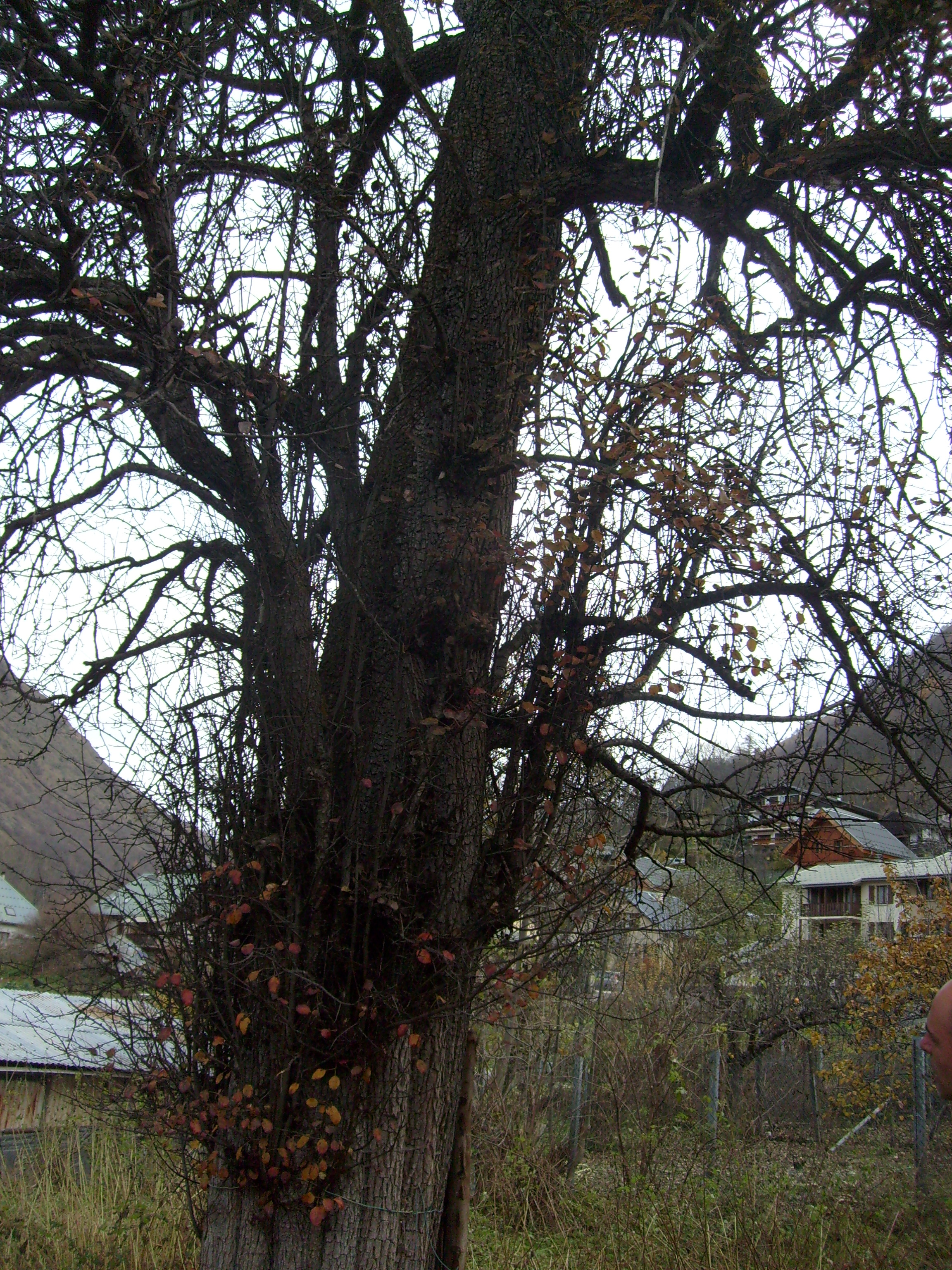 mizo n les maternelles d couvrent les arbres parc national des ecrins. Black Bedroom Furniture Sets. Home Design Ideas