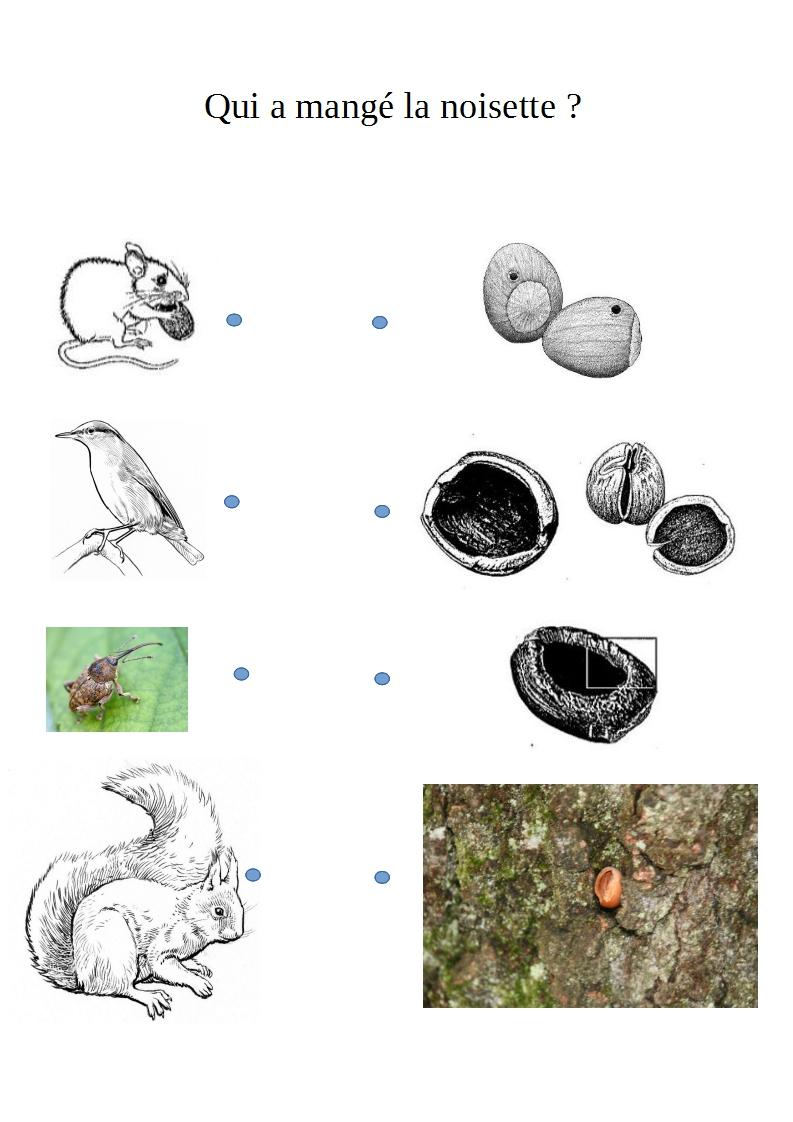 au freney d 39 oisans les coliers collectent et analysent les indices parc national des ecrins. Black Bedroom Furniture Sets. Home Design Ideas